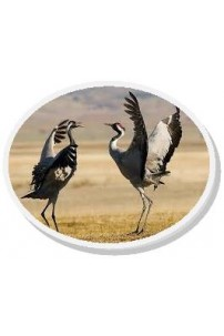 07. Avistamiento de Aves